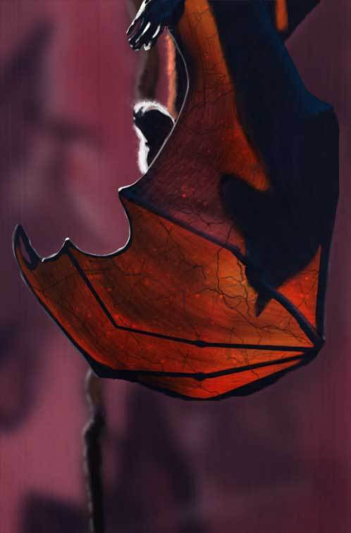 bat study by mopey
