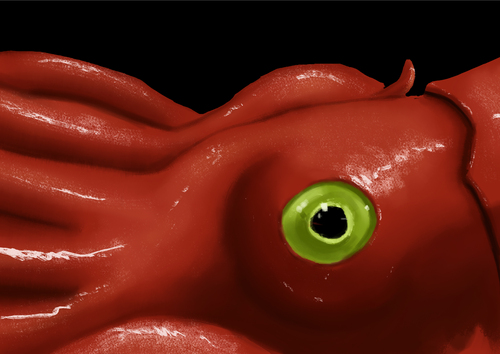 Display jumbo squid