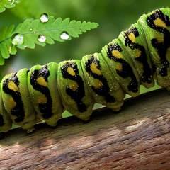 caterpillar by danielsian