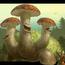 Thumb mashroom gidra