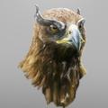 eagle by alexcash1