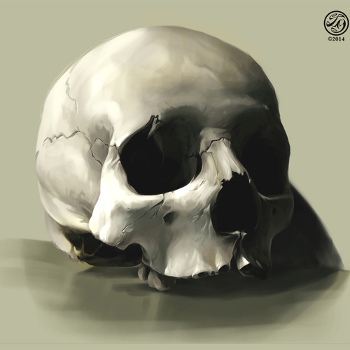 Skull Study by catherinesteuer