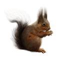 squirrel by kristinastoyanova
