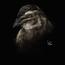quail by berov