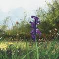 meadow by raschomon