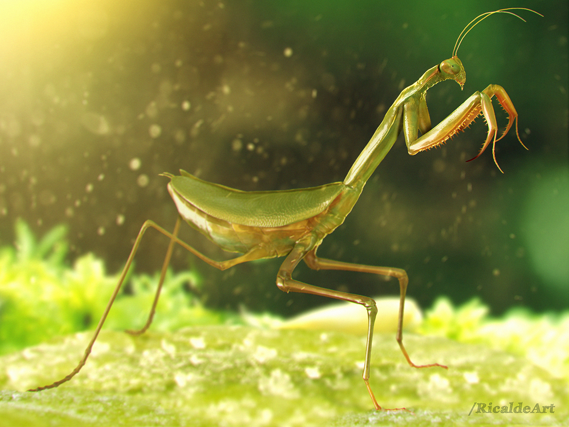 mantis macro world by ricaldeart