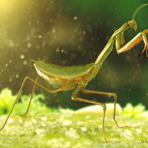 Mantis Macro World by ricaldeart