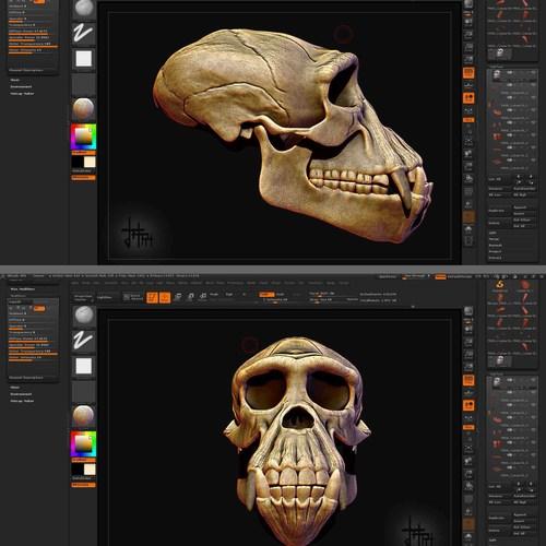Ape Skull Study by hassamjafri
