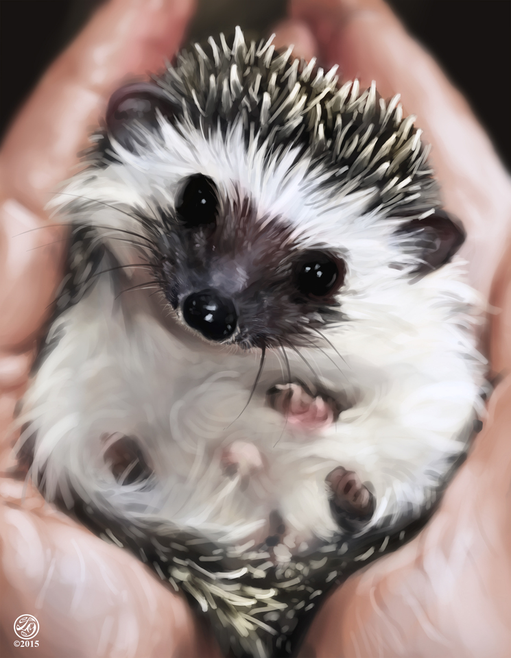 hedgehog study by catherinesteuer