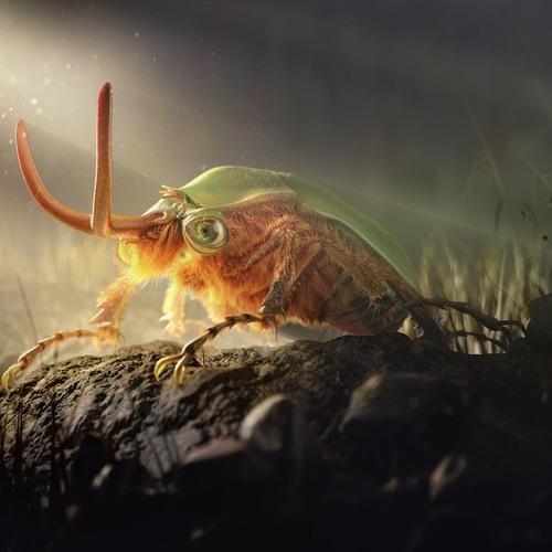 Lovely Striped Love Beetle by danielsian