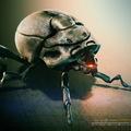 spy x beetle by mh.attaran