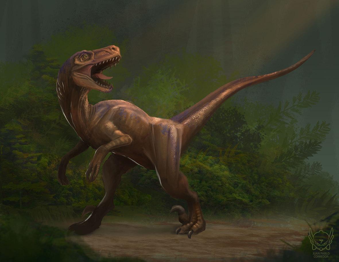 raptor by juanpablocorredor