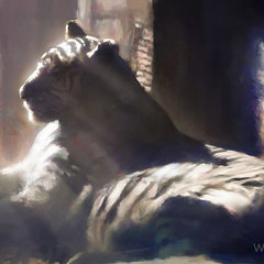 daily practice - tiger at zoo by wootha