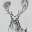 deer by sunbirajtanjil