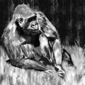 gorilla by mohq