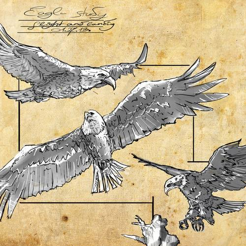 Eagle Study 1 by latzkovits
